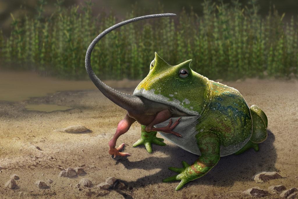 Лягушки древнее динозавров!