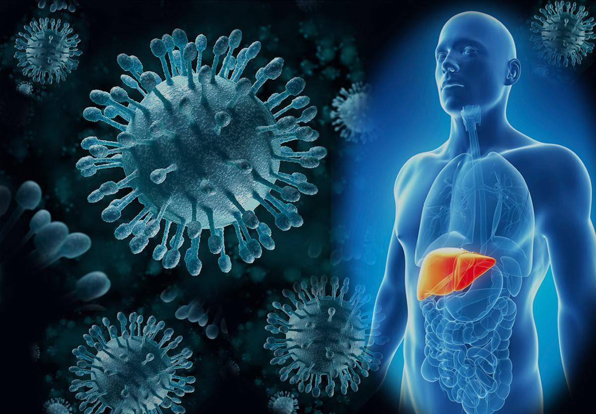 Сколько живет вирус гепатита С на свежем воздухе