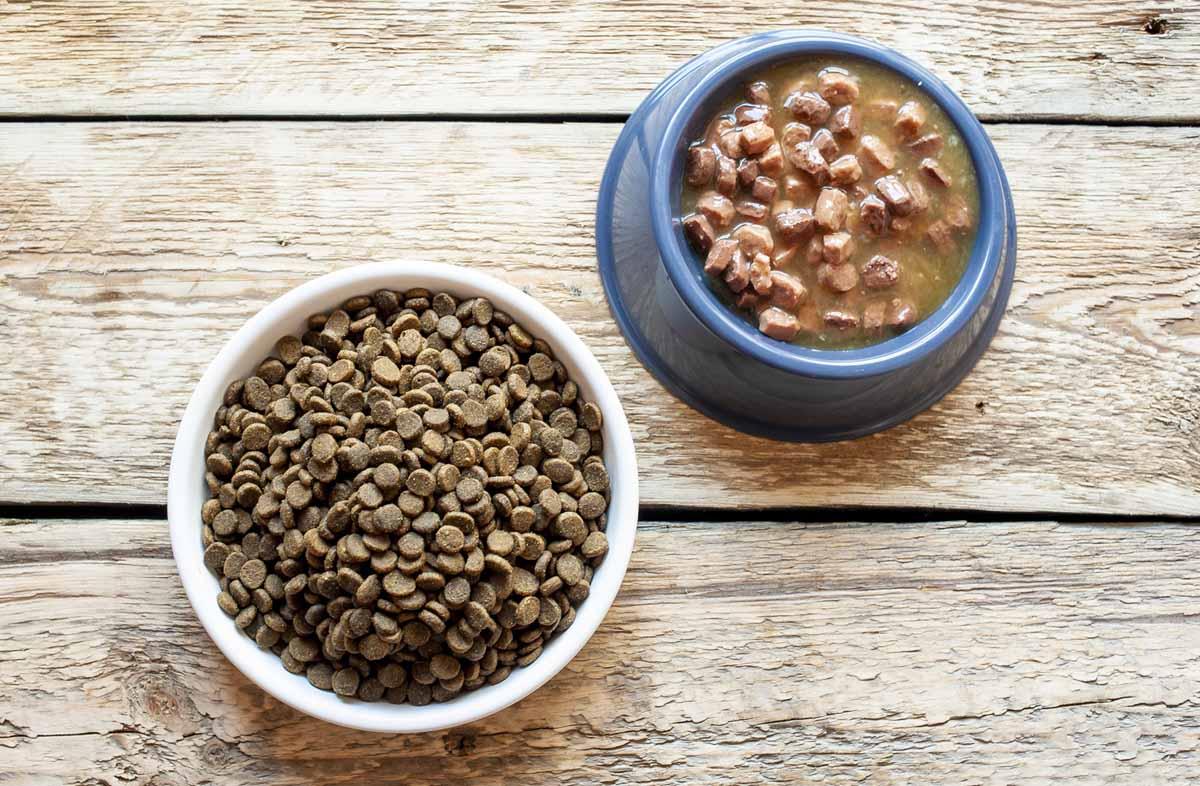 Какой корм для кота лучше, сухой или влажный?